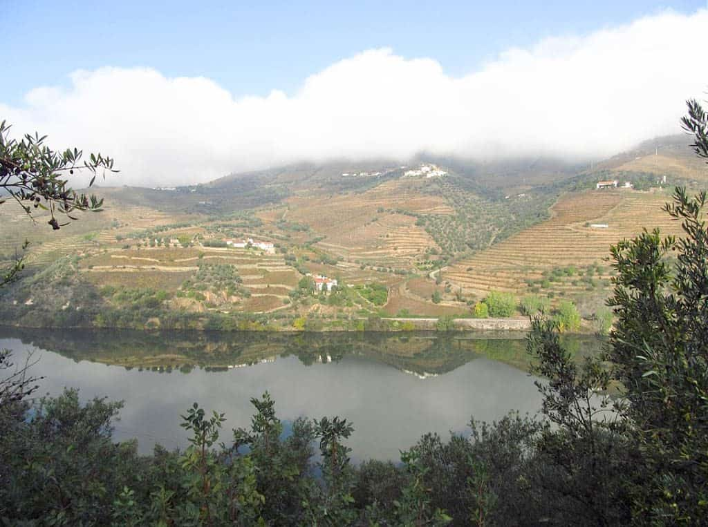 Best Activities In Porto - THE DOURO VALLEY FOR PORT