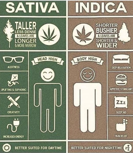 Guide to Smoking weed in Amsterdam